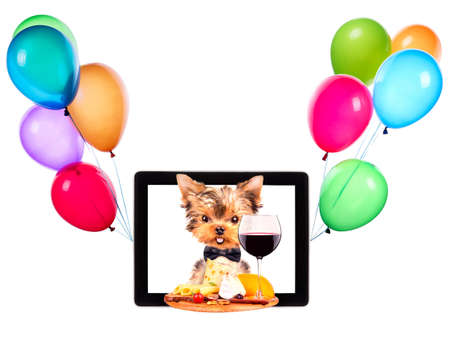dog holding tray with food and balloons on tablet screen photo