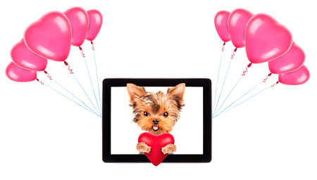 valentine puppy dog holding heart with tablet сomputer and balloons photo