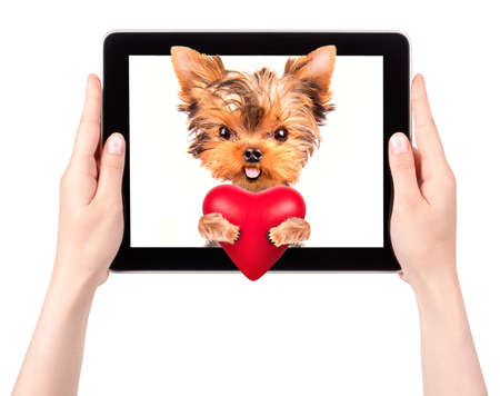 valentine puppy dog holding heart with tablet сomputer photo