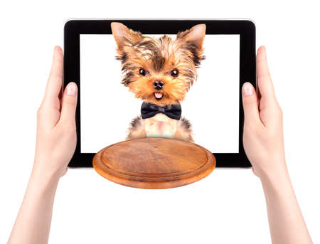 dog holding service tray on a digital tablet screen photo