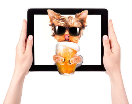 dog on tablet computer with glass of beer photo