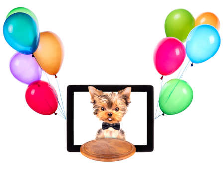 dog holding service tray on a digital tablet screen with balloons photo