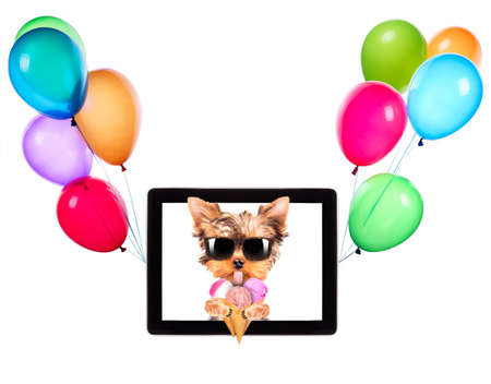 puppy dog licking with ice cream on a digital tablet screen and balloons photo