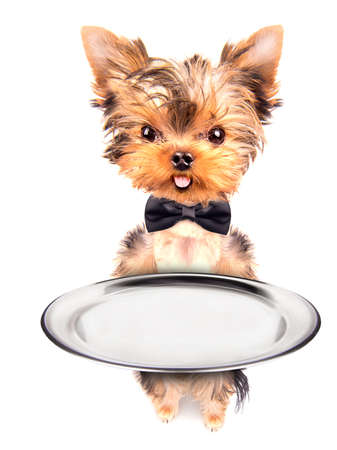 dog holding empty service tray on a white photo