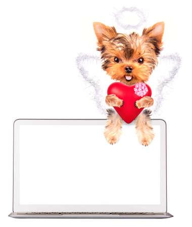 valentine puppy dog holding heart with сomputer photo