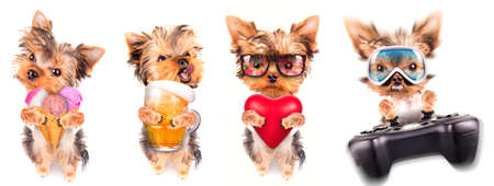 dog with beer, game pad and lover valentine photo