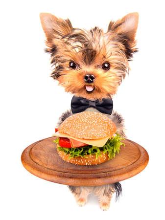 dog holding service tray with food -  hamburger photo