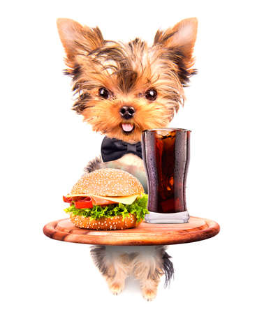 dog holding service tray with food and drink -  soda and hamburger photo