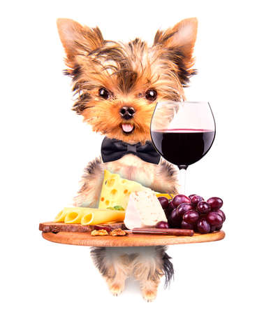 dog holding service tray with food and drink -  wine, bread, cheese and grapes photo