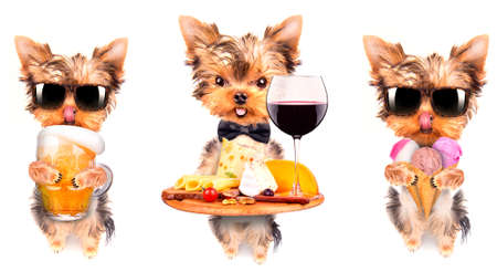 dog with food and drink -  wine, bread, cheese and grapes, ice cream, beer photo