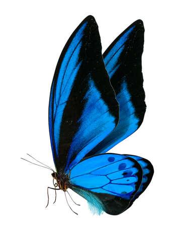 Prachtige vlinder geïsoleerd op een witte achtergrond Stockfoto - 27418043