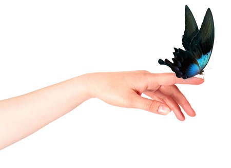 butterfly on womans hand. In motion concept isolated photo