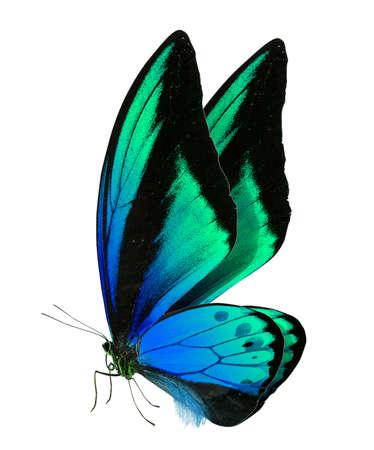 白い背景で隔離の美しい蝶 写真素材