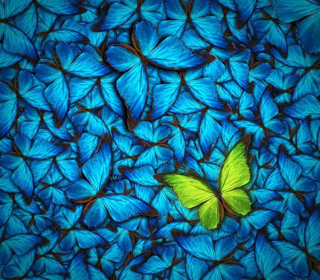 black and blue butterfly flying: beautiful background with lot of different butterflys