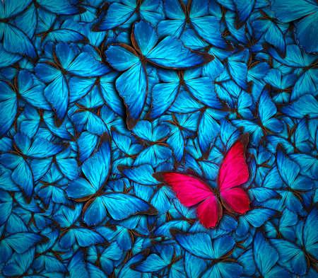多くの異なった蝶の美しい背景