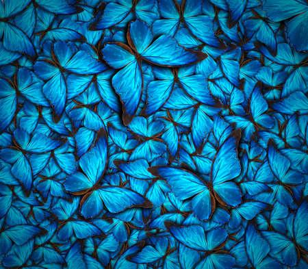 mariposa azul: hermoso fondo con gran cantidad de mariposas Foto de archivo