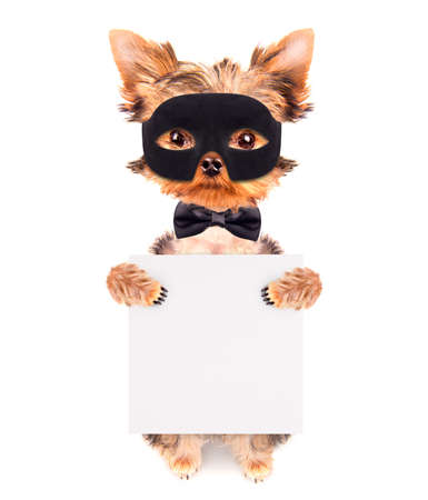 super hero puppy dog photo