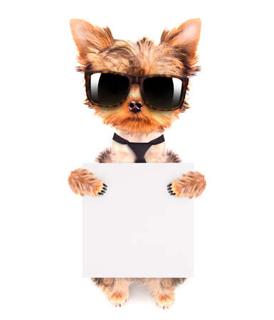dog wearing a neck bow and shades with banner photo