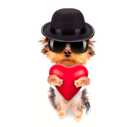 lover valentine  puppy dog with a red heart photo