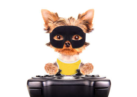super hero puppy dog play on game pad photo
