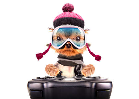 dog  dressed as skier play on game pad photo