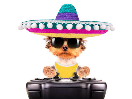 dog wearing a mexican hat play on game pad photo