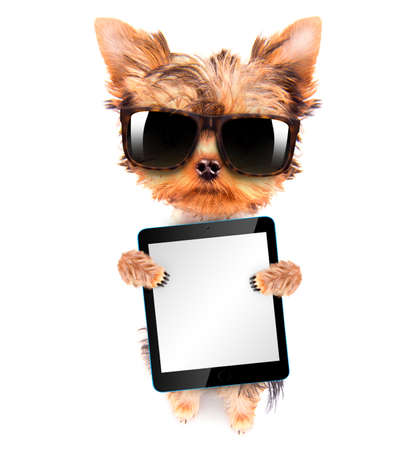 dog wearing a shades and holding tablet pc photo