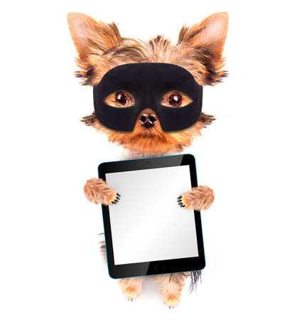 super dog: super hero puppy dog with tablet pc