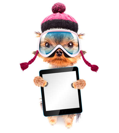 dog  dressed as skier with tablet pc photo