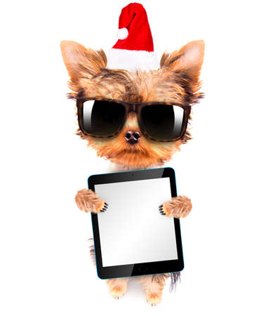 christmas dog as santa with tablet pc photo
