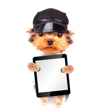 A dog wearing a cap with tablet pc photo