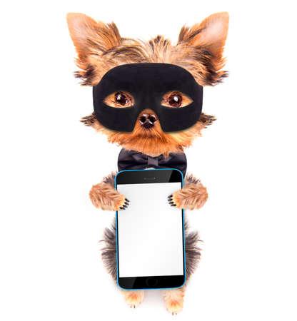 super hero puppy dog with phone photo