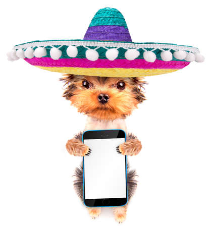 dog wearing a mexican hat with phone photo