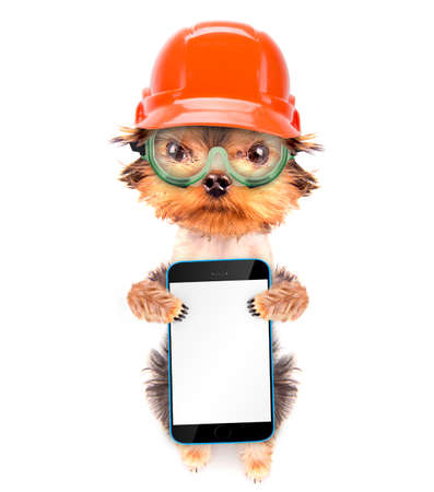dog  dressed as builder with phone photo