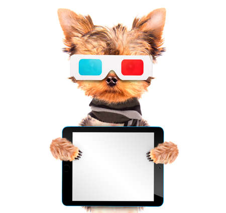 dog going to the movies with tablet pc photo