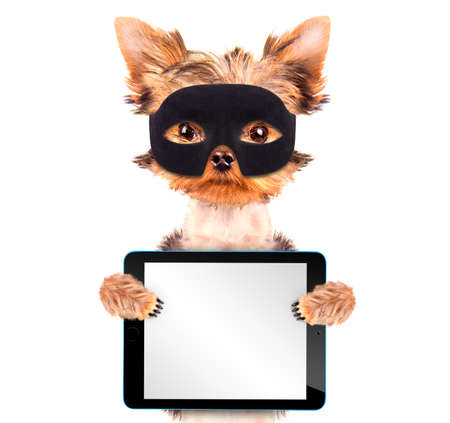 super hero puppy dog with tablet pc photo