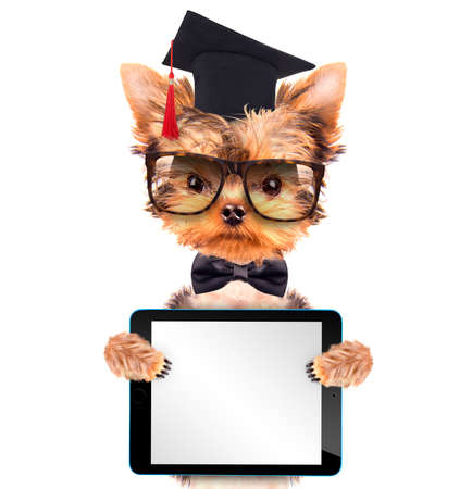 graduated dog with tablet pc photo
