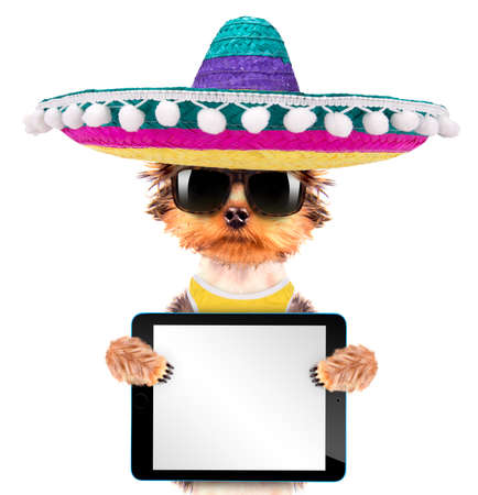 dog wearing a mexican hat with tablet pc photo