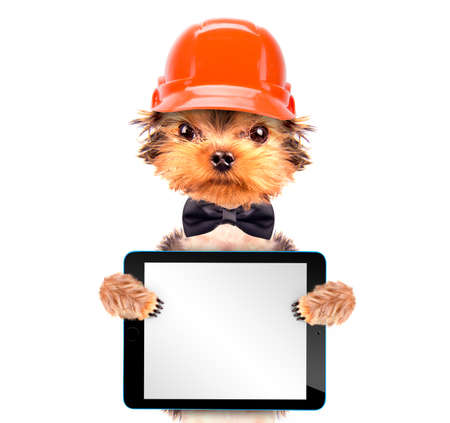 dog  dressed as builder with tablet pc photo