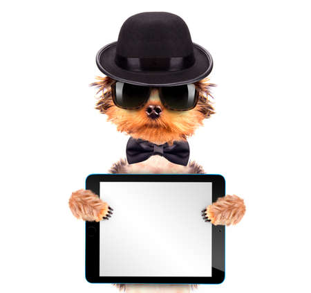 Dog dressed as mafia gangster with tablet pc photo