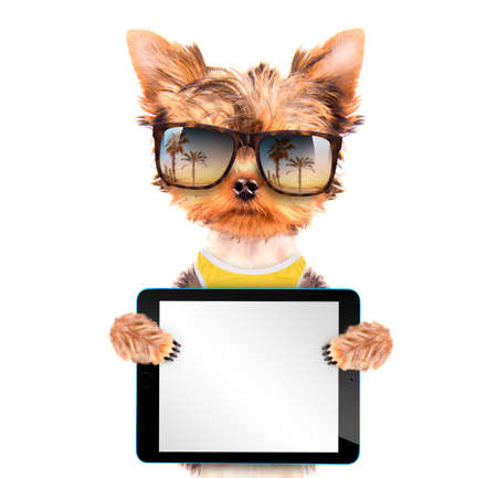 tourist dog with tablet pc photo