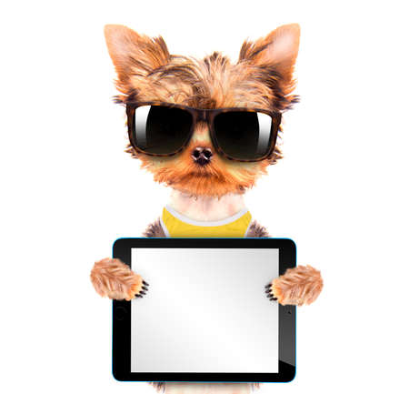 dog wearing a shades with tablet pc photo