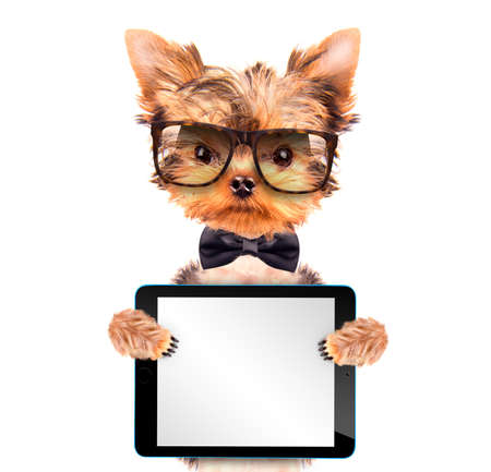 dog wearing a neck bow with tablet pc photo
