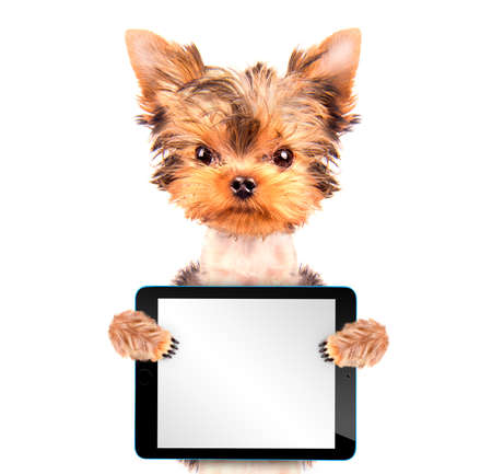 dog holding a  blank tablet pc photo