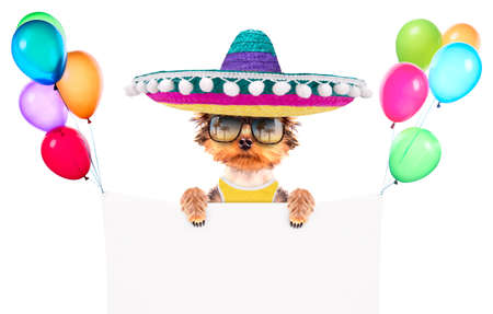 dog wearing a mexican hat with banner photo