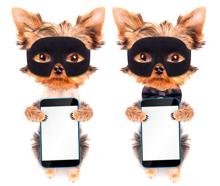 super dog: super hero puppy dog with phone