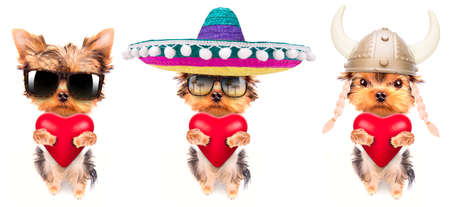 woeful: lover valentine  puppy dog with a red heart