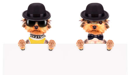 dressed: Dog dressed as mafia gangster with banner Stock Photo