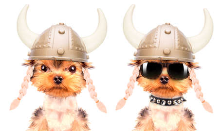 dressed up: dog dressed up as a viking