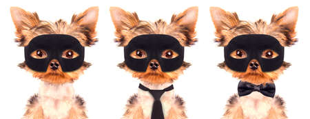 super dog: super hero puppy dog Stock Photo